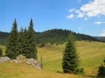 Paysage isolé d'arbre d'automne en montagne carpathienne, Roumanie Photos stock