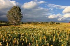 Paysage jaune Images stock