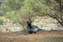 Paysage le long de la commande scénique de Moralana, les chaînes des flinders, SA, Australie image stock