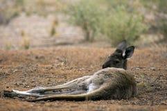 Paysage le long de la commande scénique de Moralana, les chaînes des flinders, SA, Australie photos libres de droits