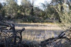 Paysage le long de la traînée de Gnamma, Hyden, WA, Australie image libre de droits
