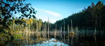 Paysage lithuanien de lac Image libre de droits