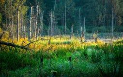 Paysage lithuanien de lac Images libres de droits