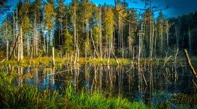 Paysage lithuanien de lac Images stock