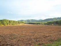 Paysage local avec la terre de forêt donnant sur les montagnes Photos stock