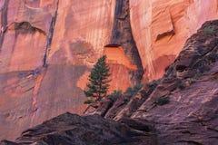 Paysage lumineux d'automne en Zion National Park images libres de droits
