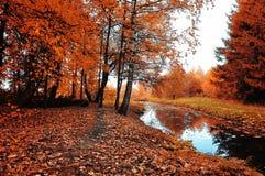 Paysage lumineux de forêt d'automne avec les arbres d'automne et la rivière étroite de forêt par temps nuageux Image stock