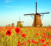 Paysage magique avec un champ des pavots et des moulins de vent sur un sunn Photographie stock libre de droits