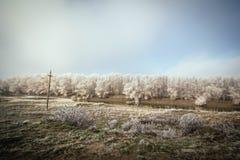 Paysage magique d'hiver Photographie stock libre de droits