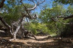 Paysage magique Forest Trees et branches Photographie stock libre de droits