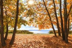 Paysage magnifique d'automne avec une vue de rivière Photo libre de droits