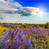 Paysage majestueux avec le champ de floraison merveilleux et le ciel parfait Photographie stock