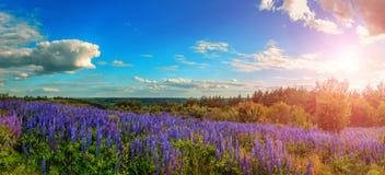 Paysage majestueux avec le champ de floraison merveilleux et le ciel parfait Photographie stock libre de droits