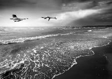 Paysage marin avec des cygnes Photographie stock libre de droits