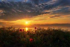 Paysage marin avec des pavots/vue magnifique de lever de soleil avec de beaux pavots sur la plage près de Burgas, Bulgarie photographie stock