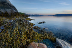 Paysage marin avec l'algue Images stock