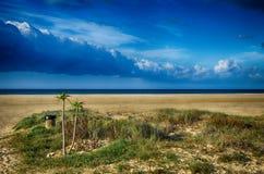 Paysage marin avec la plage et les paumes Photo libre de droits