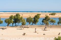 Paysage marin d'Ifaty Image libre de droits