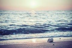 Paysage marin de vintage avec Shell et Sun photographie stock