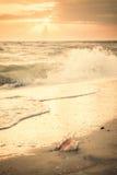 Paysage marin de vintage avec Shell et Sun photos stock