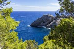 Paysage marin des pins Image libre de droits