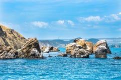 Paysage marin - des roches sont lavées par la Mer Noire, oiseaux sur les roches, Karadag Crimée Photographie stock libre de droits