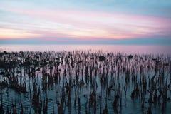 Paysage marin - scène de coucher du soleil Photographie stock