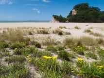 Paysage marin scénique de littoral de la péninsule NZ de Coromandel Image libre de droits