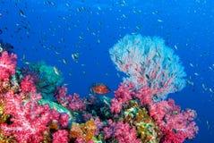 Paysage marin sous-marin de plongée à l'air sous-marine merveilleuse Photographie stock