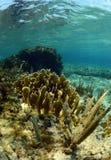 Paysage marin sous-marin naturel avec gorgonian photo libre de droits