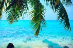 Paysage marin tropical avec la vue verte de feuilles et d'océan de palmier image stock