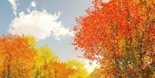 Paysage merveilleux d'automne Photos stock