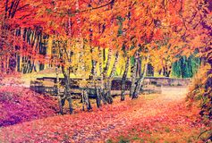 Paysage merveilleux d'automne arbres majectic avec la feuille colorée Rétro type photographie stock