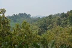 Paysage merveilleux de colline avec la forêt images stock