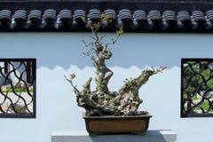 Paysage mis en pot chinois Photographie stock libre de droits