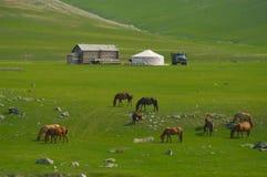 Paysage mongol avec des chevaux et des yurts Image libre de droits