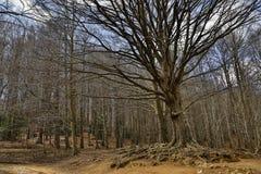 Paysage montagneux des arbres d'hiver photographie stock