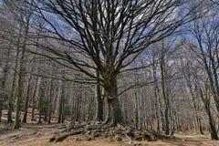 Paysage montagneux des arbres d'hiver photographie stock libre de droits