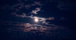 Paysage mystique foncé avec la pleine lune et la silhouette de l'arbre dessus image stock