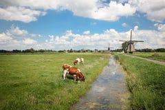 Paysage néerlandais Image libre de droits