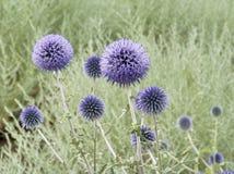 Paysage naturel avec des usines de champ, fond Photographie stock libre de droits