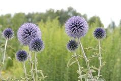 Paysage naturel avec des usines de champ, fond Images stock