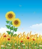 Paysage naturel avec du blé illustration de vecteur