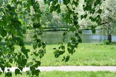Paysage naturel d'été, fond Images libres de droits