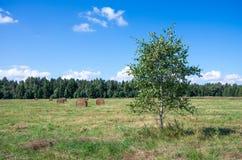 Paysage naturel d'Europe du Nord Images stock