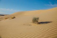 Paysage naturel de désert, dunes de sable, buissons photo libre de droits