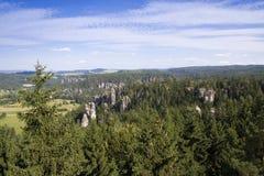 Paysage naturel de jour d'été des pins Photographie stock