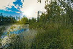 Paysage naturel de jour par la rivière de forêt Images libres de droits
