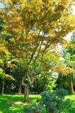Paysage naturel de parc de ressort Image libre de droits