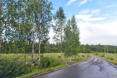 Paysage naturel de ranch de la Finlande Photos libres de droits